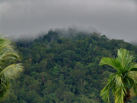 Gunung Palung National Park, West Kalimantan, Indonesia