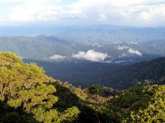 Gunung Palung National Park, West Kalimantan, Indonesia, Borneo