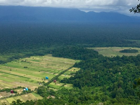 Reforestation cooridor in Gunung Palung National Park