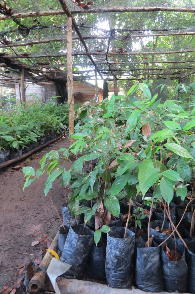 Tree seedlings in a nursery.