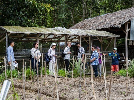 Organic gardening demonstration