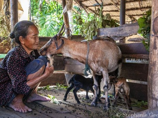 Goats for Widows program participant Ibu Sba caring for her goats