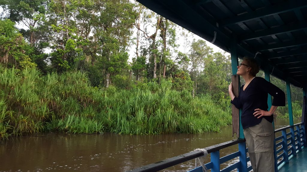 A traveler in West Kalimantan, Indonesia watches proboscis monkey's from a boat.